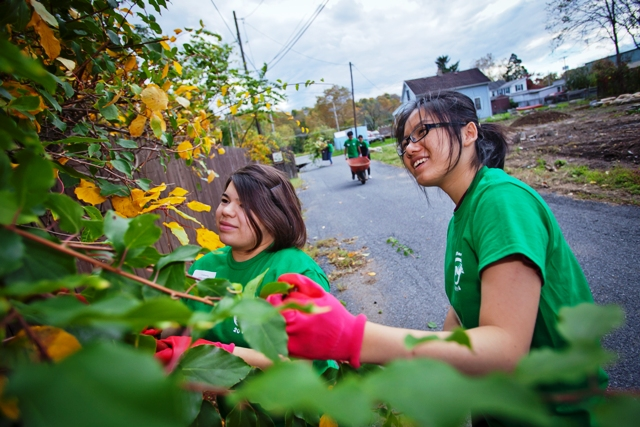 Victoria Hetherington '18 and Wen Shi '17 clear weeds at the Lynn Street Community Garden.