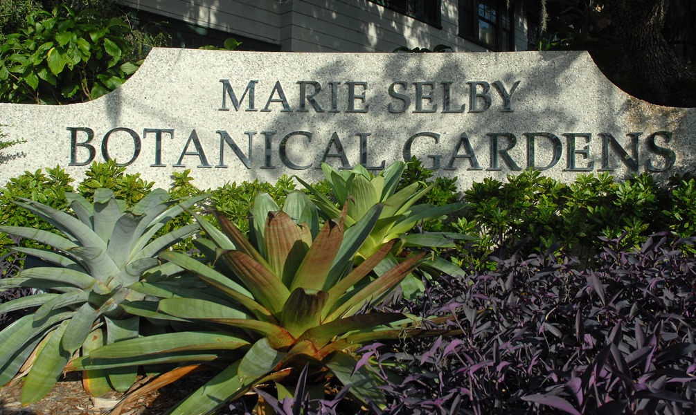 Bromeliads at the entrance. Credit: Courtesy Marie Selby Botanical Gardens.