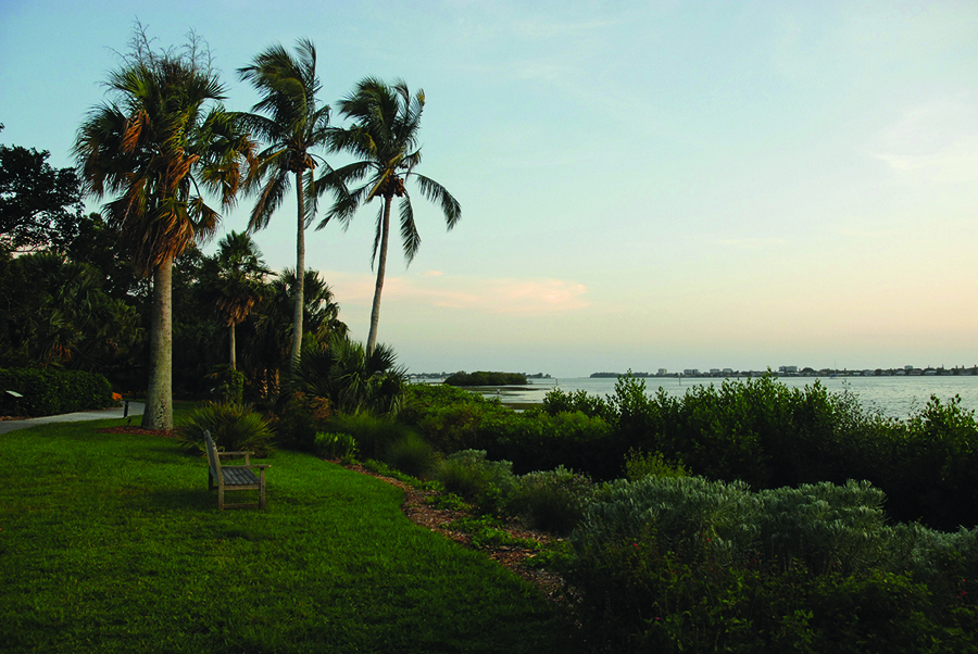 Bayfront with palms. Credit: Courtesy Marie Selby Botanical Gardens.