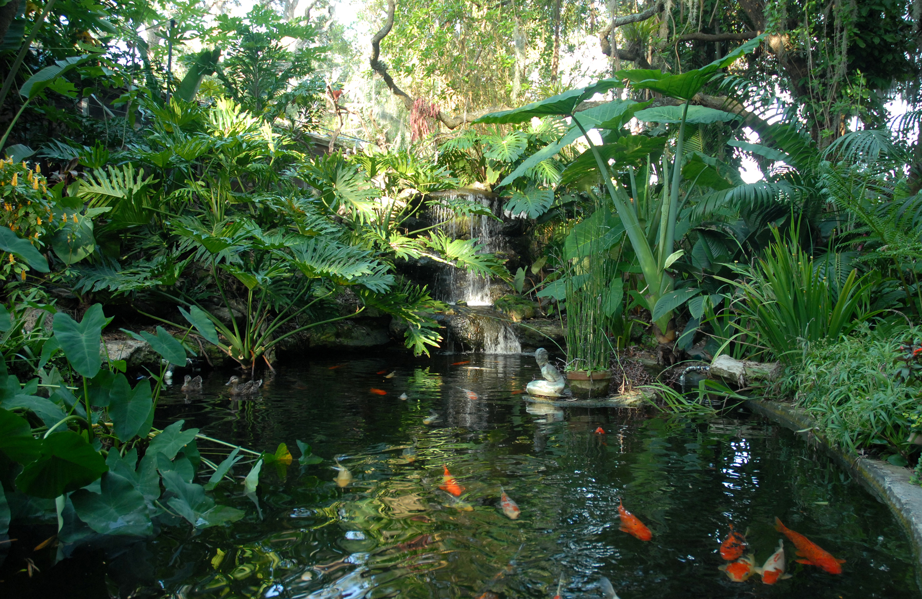 Charmant Koi Pond. Credit: Courtesy Marie Selby Botanical Gardens. Bayfront With  Palms. Credit: Courtesy Marie Selby Botanical Gardens.
