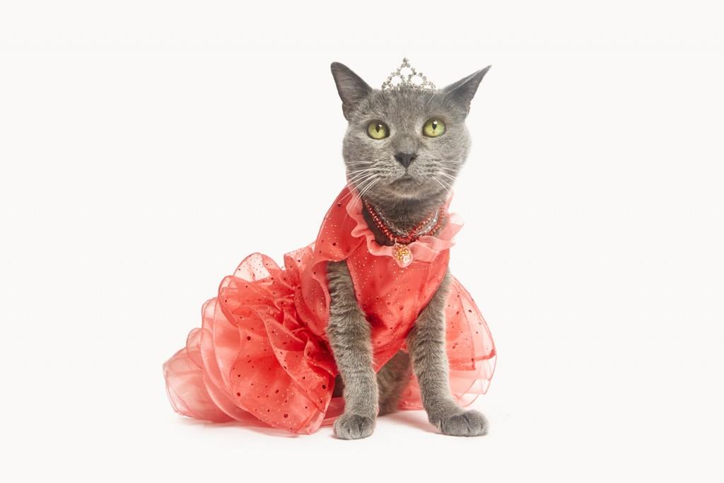 Ponette the cat