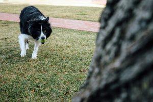 Jay the Dog
