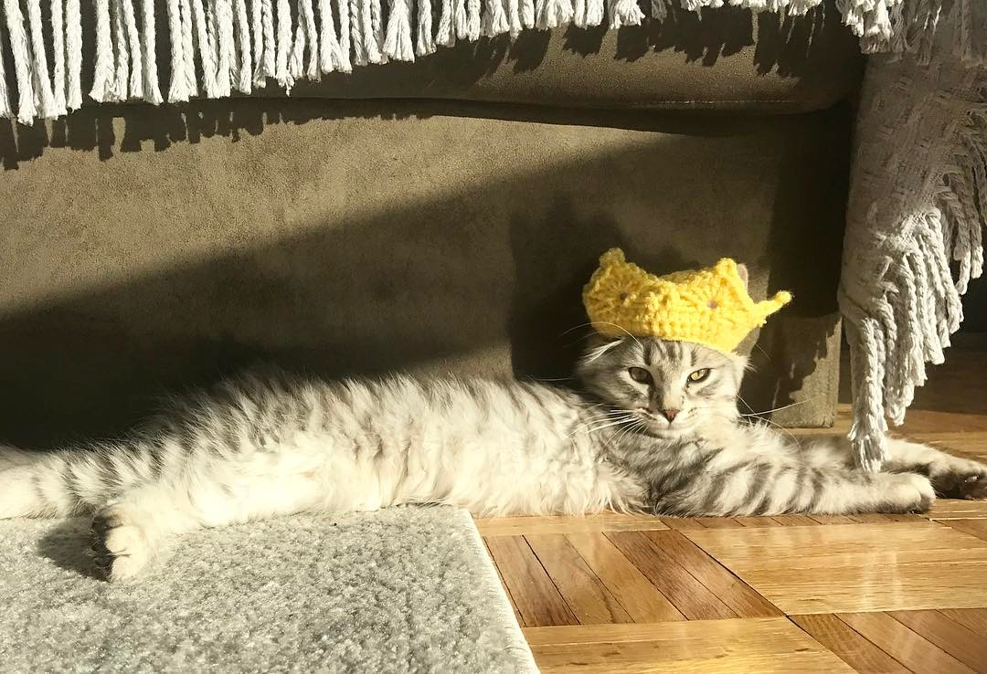 Leo the cat wearing a yarn made of fabric