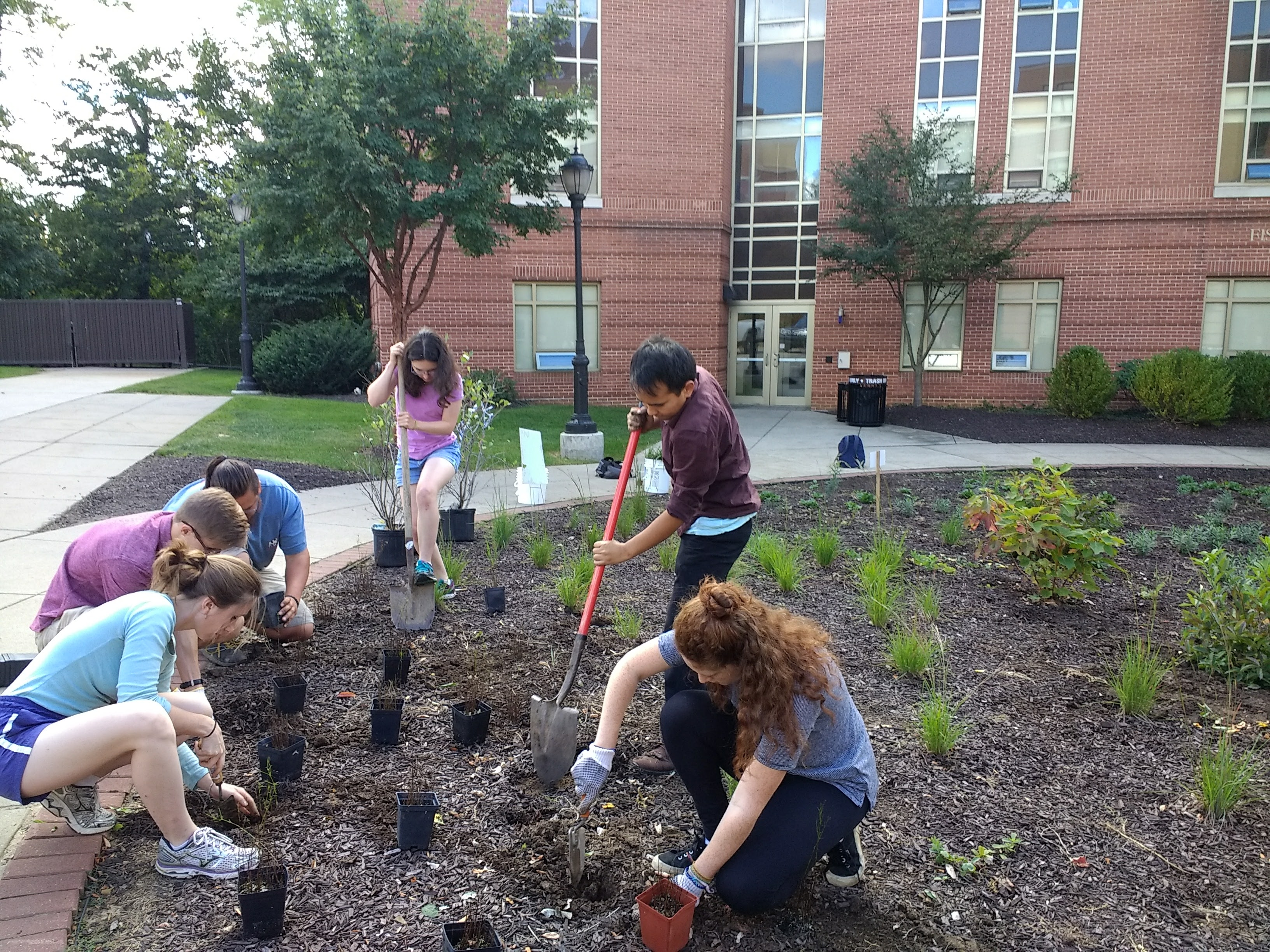 A group of students plants vegetation for a bioswale in front of a residence hall.