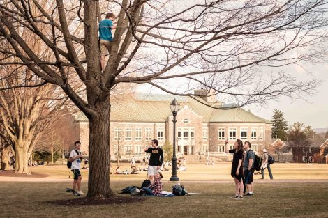 A student stands in a tree on the Quad as frends look on.