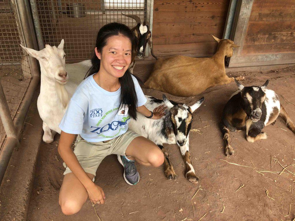 Alison Baranovic '19 (biology) with goats during her internship at Philadelphia Zoo