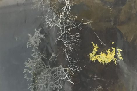 Megan Mauriello's Slime Mold Art