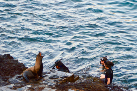 Avery Nunn submission of a photo of students with a sea lion.