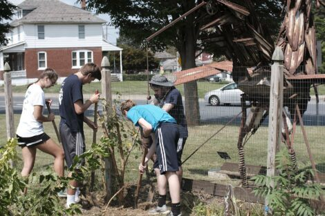 Several students use garden tools to remove a tree along a fence line
