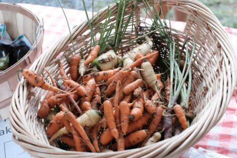 Carrots in a basket at the Farm Stand run by the Vegetables in the Community program