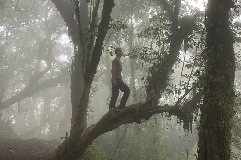 An image taken by Remy Oktay '23 of a person standing on a tree limb on a foggy morning