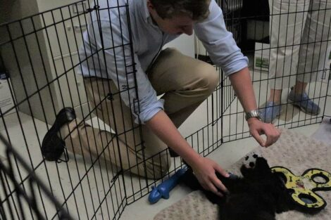 Student pets puppy Jack
