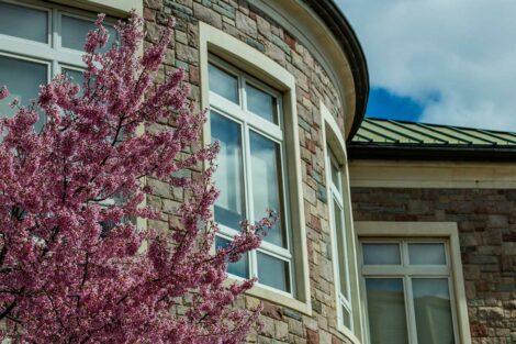 Pretty pink flowers near Farinon