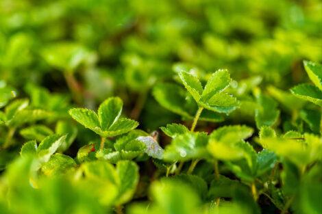 Green plants at LaFarm