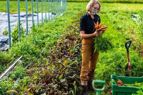 Lisa Miskelly gathers carrots on LaFarm.