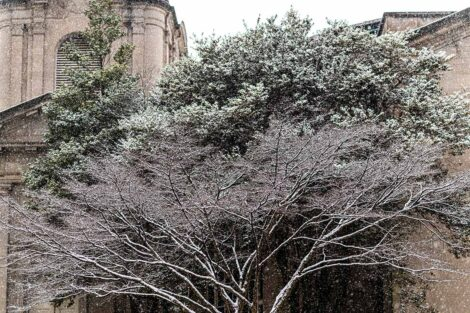 a snow-covered tree near Colton Chapel