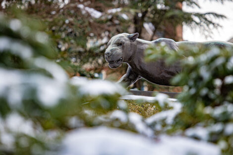 snow covers trees near the Leopard statue on campus