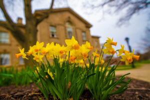 Yellow flowers outside of Kirby Hall of Civil Rights