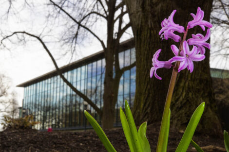 A purple flower blooms in front of Skillman Library.