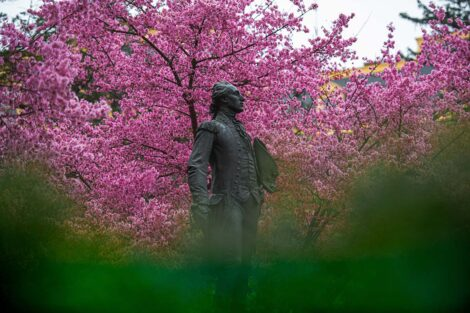 A statue of the Marquis de Lafayette, in front of Colton Chapel and pink trees.