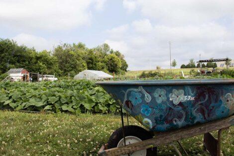 A wheelbarrow at LaFarm.