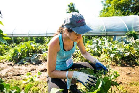 A student gathers produce at Easton Urban Farm