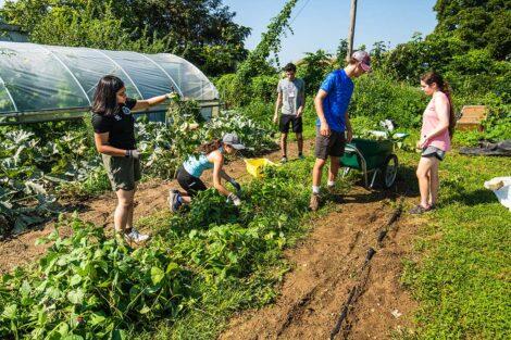 Students work at the gardens of Easton Urban Farm.
