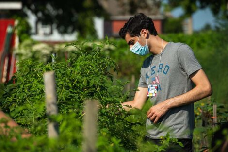 A student, wearing a mask, gathers produce at Easton Urban Farm.