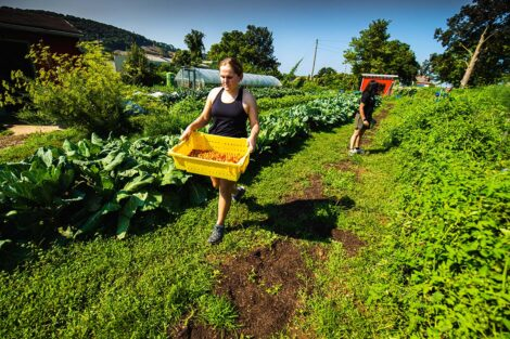 A student carries a container of produce at Easton Urban Farm.