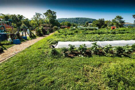 Easton Urban Farm