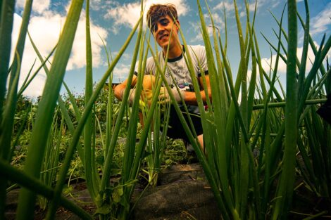 A student tends to scallions at LaFarm.
