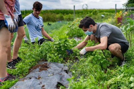 Students tend to crops at LaFarm