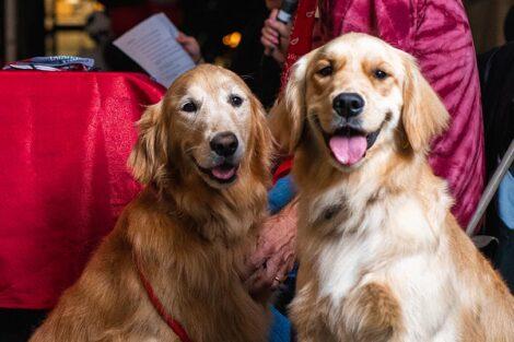 Golden retrievers Sadie and Sunshine sit beside Bill Hurd.