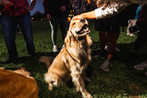 A golden retriever sits and gets pet by a student