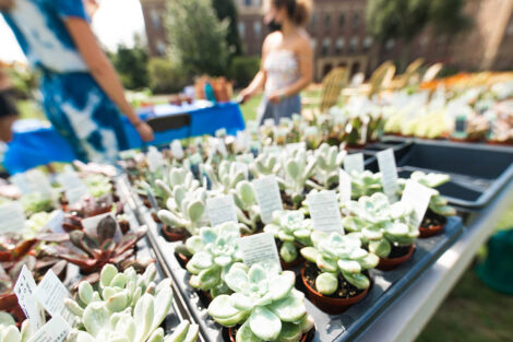 rows of succulents in planter trays sit on table on the Quad