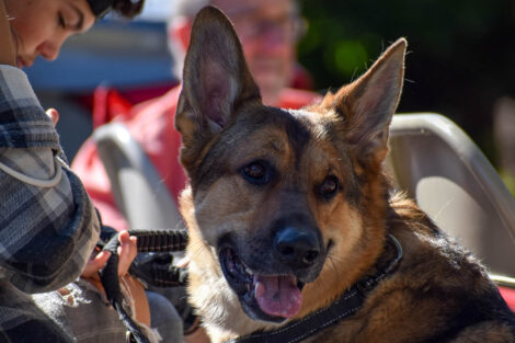 German Shepherd sits with owners