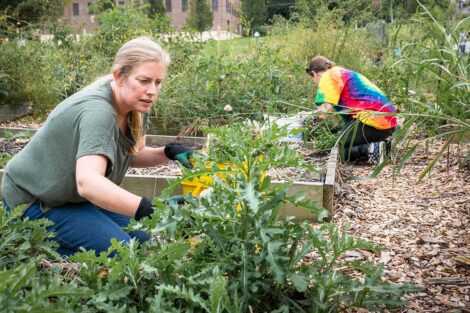 Staff volunteers tend to a garden.