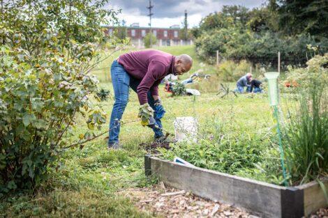A staff volunteer tends to a garden.
