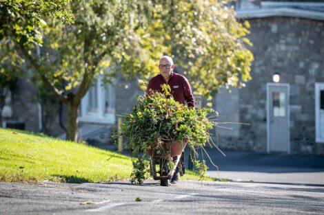 A staff volunteer carries weeds in a wheelbarrow.