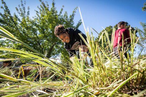 Sherryta Freeman pulls weeds.